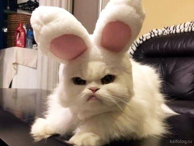 Забавные котики (35 картинок)