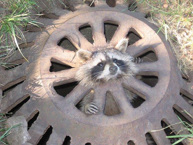Животные неудачи (40 фото)