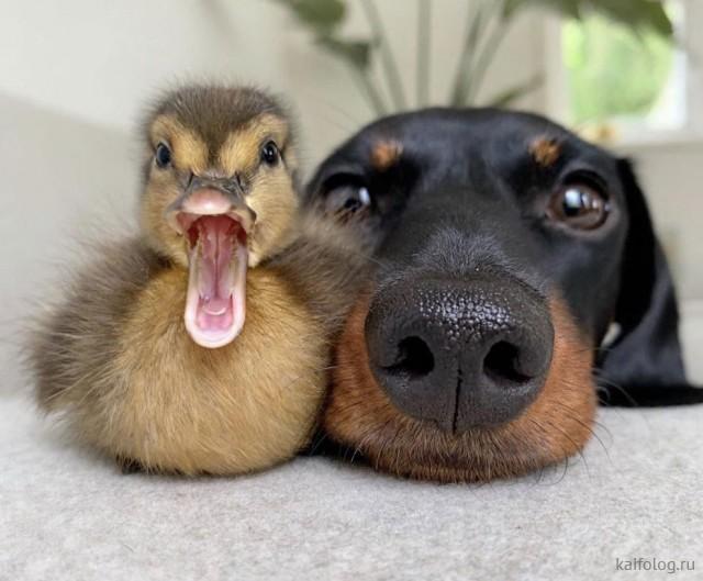 Смешные фото с животными (35 штук)