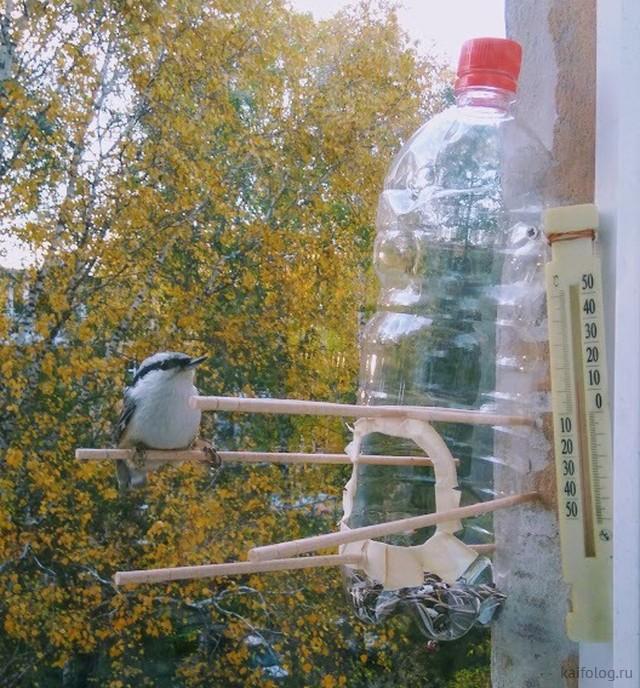 В России всё для птиц (40 приколов)