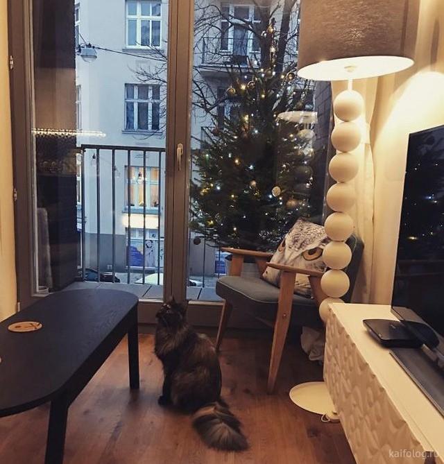 Коты и ёлки  Приколы,kaifolog,ru,елка,коты,новый год