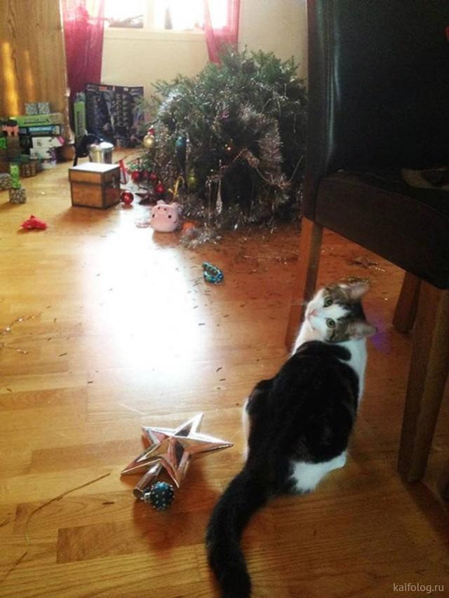 Коты и ёлки (35 фото)