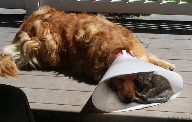 Смешные фото котов (35 фото)