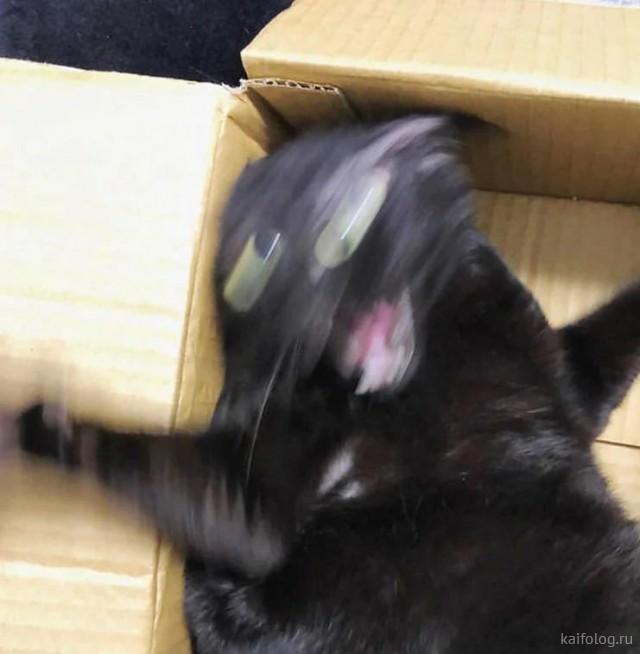 Забавные котики (40 фото)