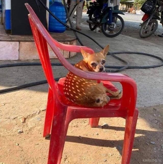 Про животных с юмором (40 фото)