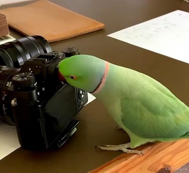 Приколы про попугаев (40 фото)