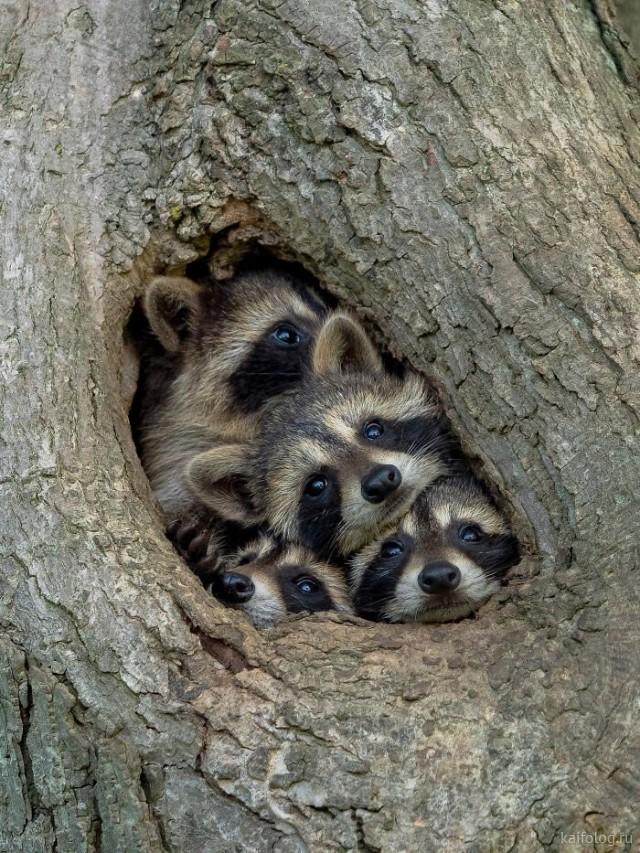 Животные в кадре (40 приколов)