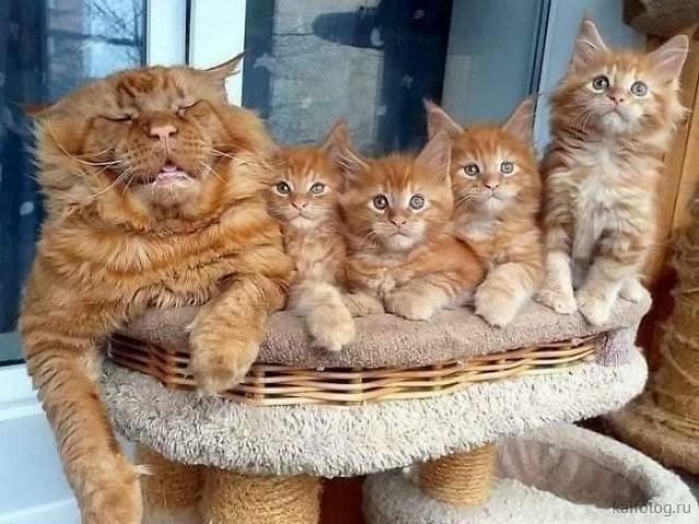 Котики и кошечки (40 фото)