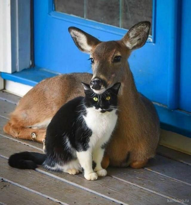 Прикольные животные (35 фотографий)